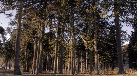 bosques1300003