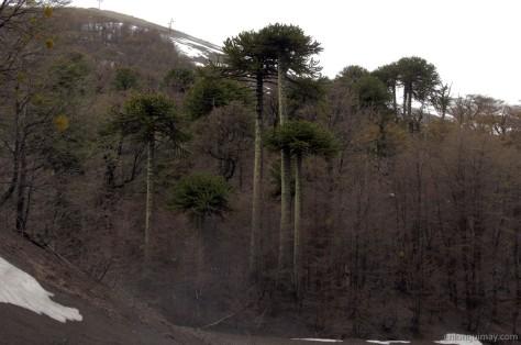 bosques1300004