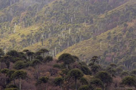 bosques1300006