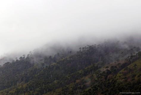 bosques1300008