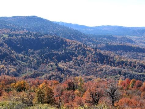 bosques1300009