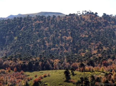 bosques1300010