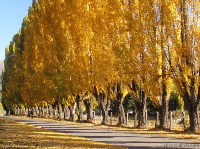 otoño1200003