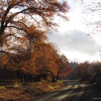 Comienza el otoño en Lonquimay