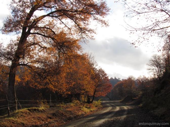 otoño1200004