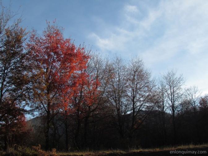 otoño1200005