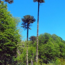 Sector la fusta 2009