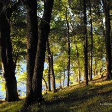 Icalma verano 2011
