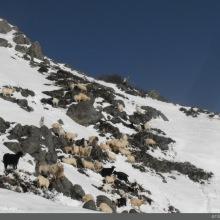 Cuando nos quedan unos pocos metros para salir del bosque, podemos ver el ganado que se refugia en unas piedras. Pero lo que parece cercano aun está lejos y la subida es muy pronunciada