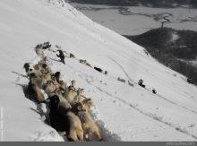 El regreso es lo más difícil. Las cabras deben seguir la huella que hicimos por donde subimos y eso es lo mas complicado.