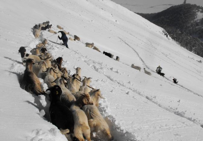 Rescate andino: vivencias del Lonquimay profundo