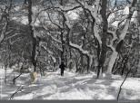 En el bosque las cosas se complicaban un poco, algunas cabras rodaban cerro abajo como bolas de nieve y había que acudir a su rescate y moler con los bastones el hielo .
