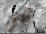 Durante el trayecto nos encontramos con algunas cabras muertas por los intensos frios.