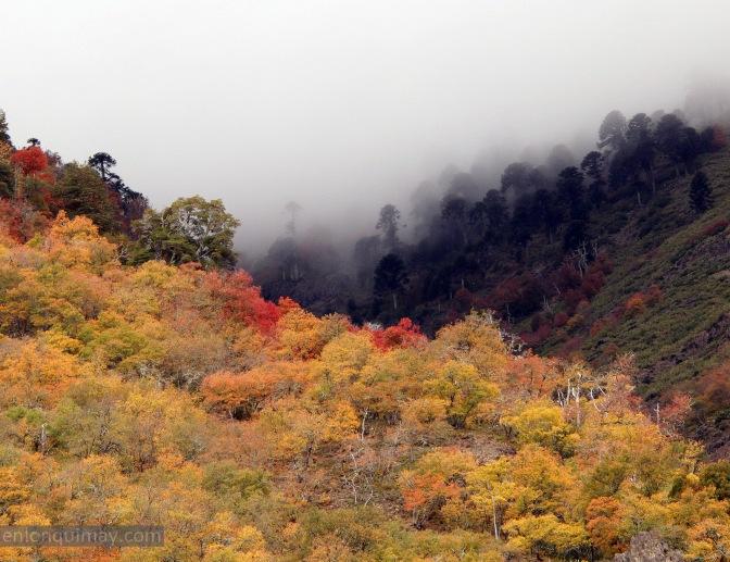 Lonquimay en otoño: zona norte