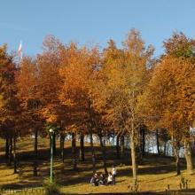 Cerrito las Banderas en otoño (2012)