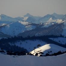 Vista a los andes - Mono Andes
