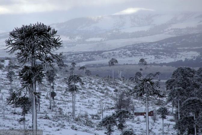 Resultado de imagen para lonquimay nevado