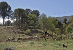 Camino a las veranadas en Ránquil secor norte de Lonquimay