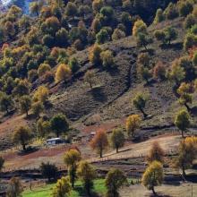 Robles en Huachicahue, Naranjo.