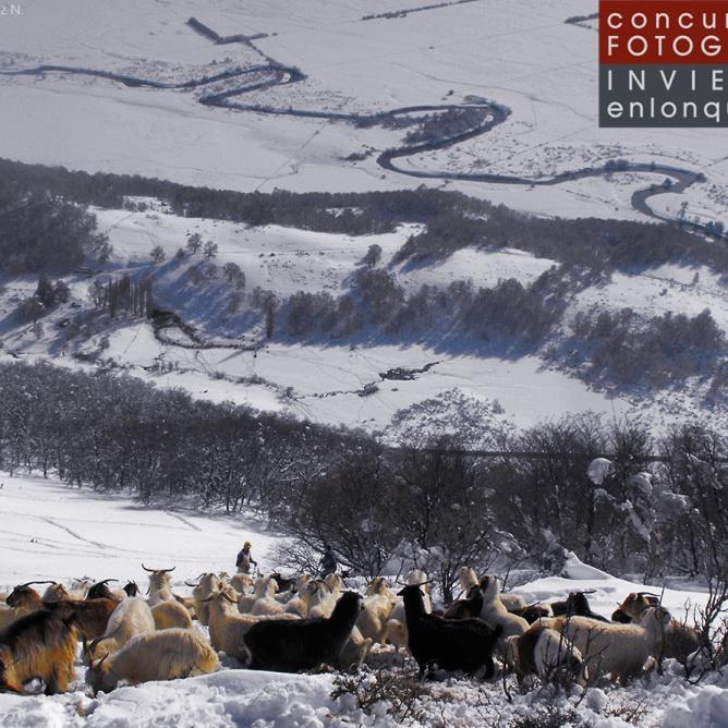 Rescate de cabras en cerro Colorado, por Luciano Muñoz N.