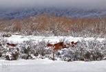 Caballos entre la nieve