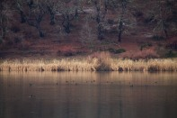 ¿Estará con nieve la laguna San Pedro?, esa fue la pregunta que me hice. Partí a retratar como los patos sobrevivían a esas condiciones climáticas pero lo único blanco que había eran los pañuelos desechables que llevaba para combatir el frío en mis narices.