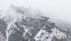 """En las alturas, las araucarias jugaban """"a la escondida"""" entre nubes que tenuemente dejaban apreciar la majestuosidad de este árbol milenario."""