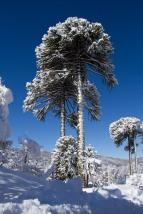 ... mientras ellas posaron para el retrato, cubiertas de nieve y siempre con una postura imponente.