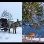 Resultados del Concurso de Fotografía Invierno en Lonquimay 2018.
